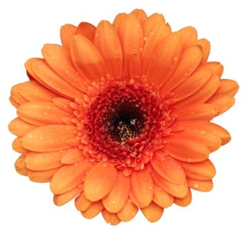 FloraliaShowTuin